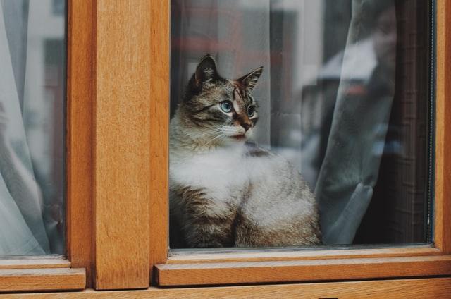 brussels cat during lockdown